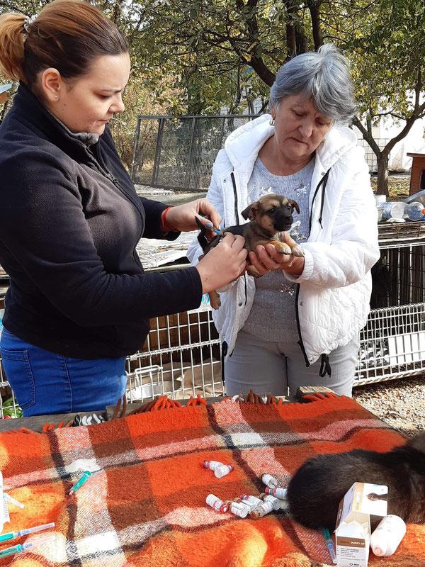 Quelle:  Pro Dog Romania eV