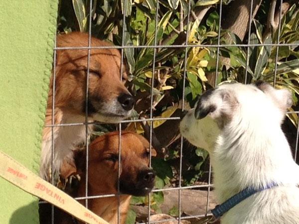 Lasso, Suso und Pulgui
