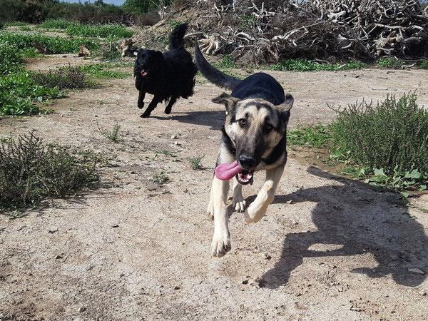 Ehemals dem Tode geweiht können die Hunde nun ihr Leben genießen