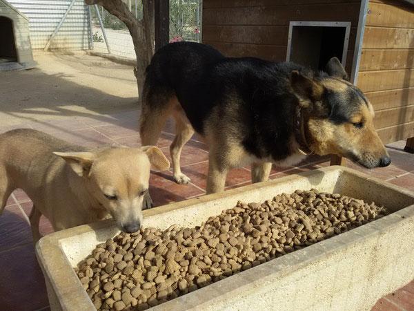 Elli und Rex - zwei tolle Hunde, die schon so lange auf eine Familie warten...