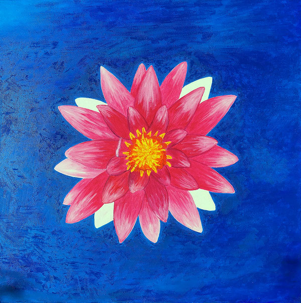 Seerose/Water lily, Oel auf Leinwand/Oil on canvas, 50x50 cm, 2017.