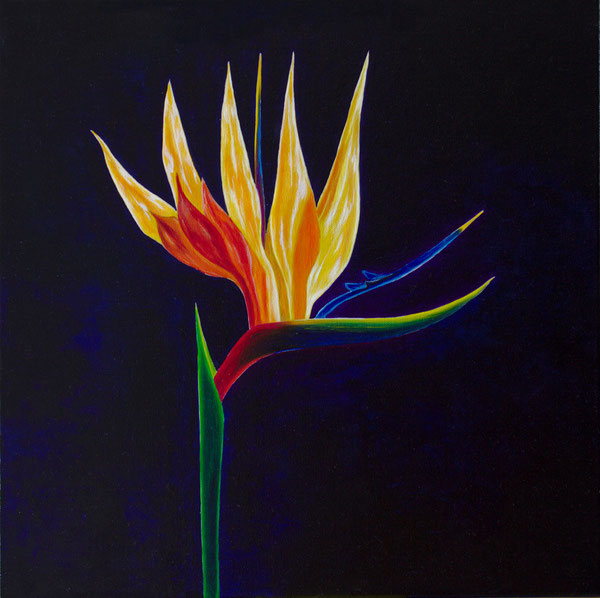 Strelizie/Strelitzia, Oel auf Leinwand/Oil on canvas, 50x50 cm.