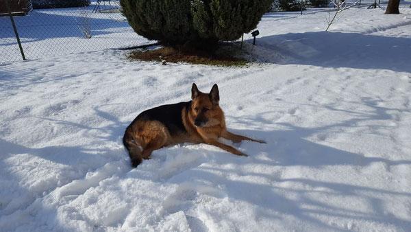 Rex, Schäferhund wurde leider nur 11 Jahre. geb.13.03.2008 - gest.04.02.2019