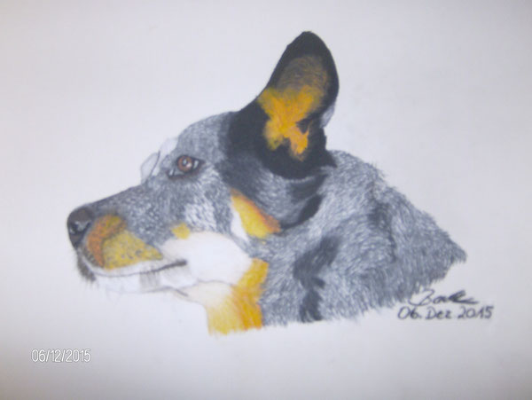 Wally, Australien Cattledog