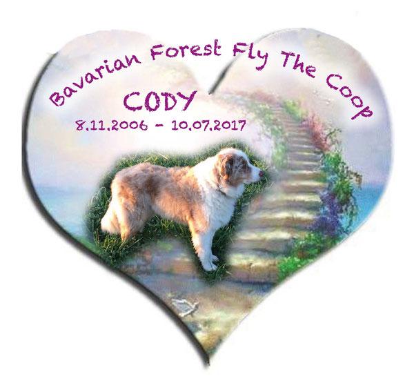Cody, Australian Shepperd