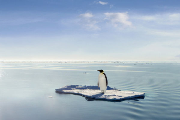 Solitary penguin on an ice floe