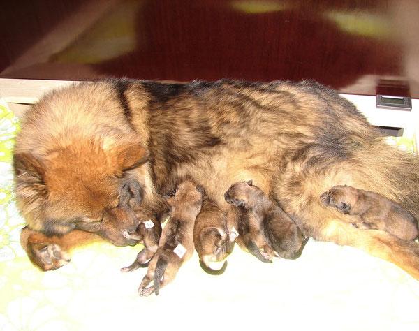 Kurz nach der Geburt sind alle hundemüde