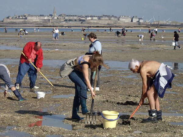 Face aux remparts de Saint Malo, les pêcheurs à pieds à marée basse.