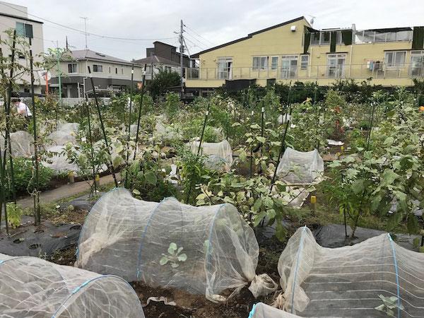 都市部の住宅街に増えている「シェア畑」