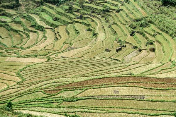 Cultures en terrasses sur la route de Bac Ha