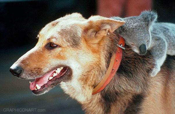 животные и фотография