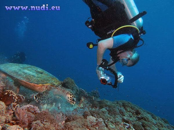 Diving in Indonesia, Bali, Lombok, Gili, ...