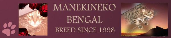 Manekineko Bengals