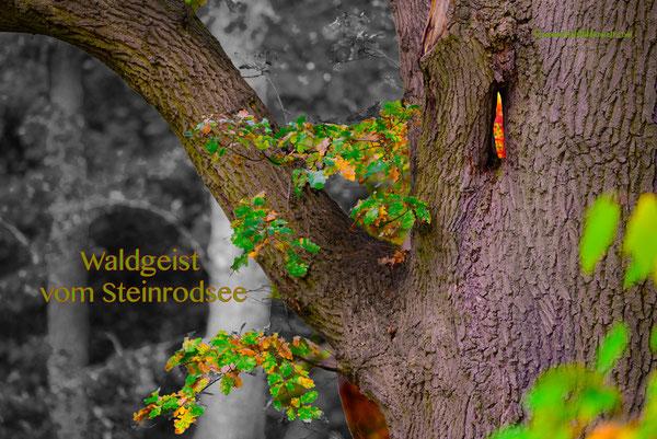Waldgeist vom Steinrodsee