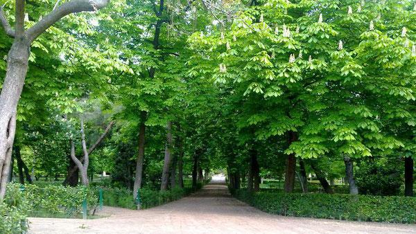 No nos pongamos intensos ni melodramáticos: al final del camino sólo hay más caminos