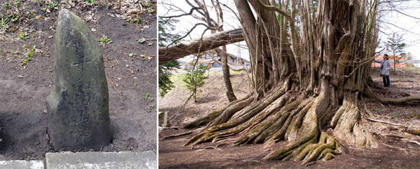 軽米町「古屋敷の千本桂」の脇の石碑にも十和田山があった。この地からも田子の御山参詣道を通ってお参り行ったものと思われる。