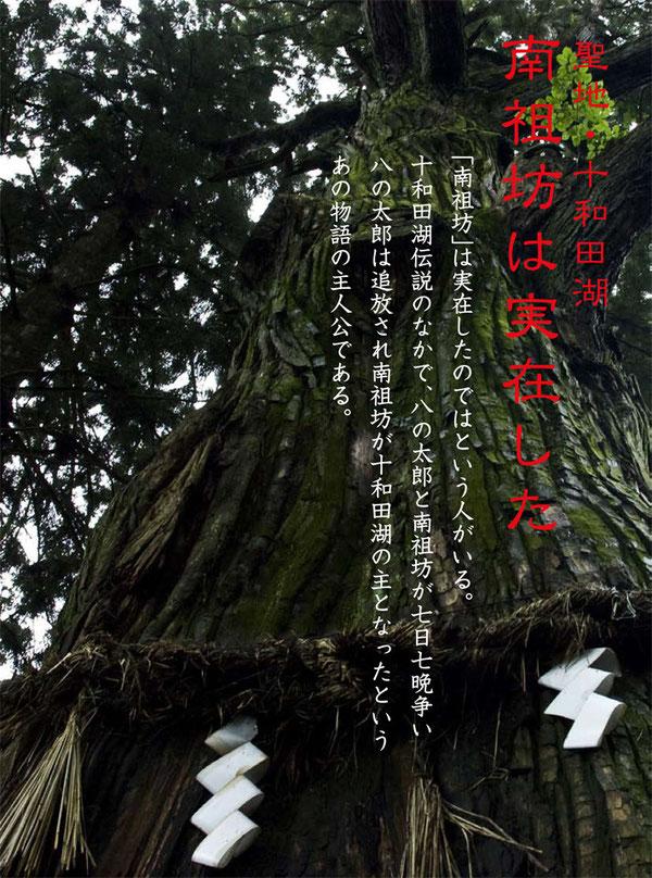 推定樹齢1000年 七崎神社の「神の杉」