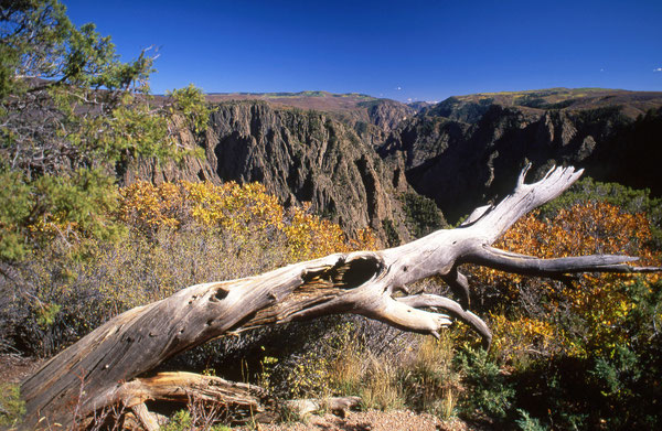 Herbst am South Rim des Black Canyon of the Gunnison.