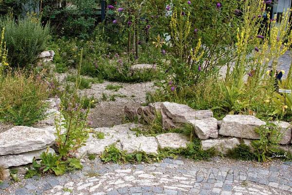 Naturgarten Wildbienen