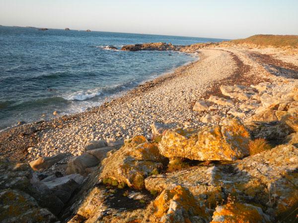Ile de Molène; Grève de la plage ouest  - Oct 2014 - ©FredG