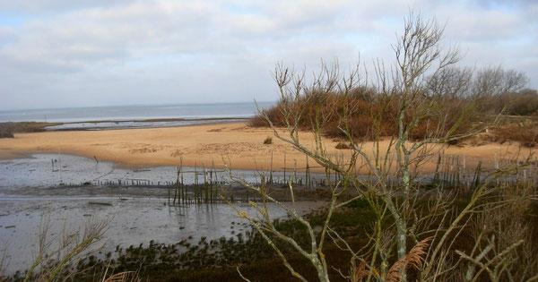 Détail d'un estey du bassin d'Arcachon - Atlantique -  ©FredG