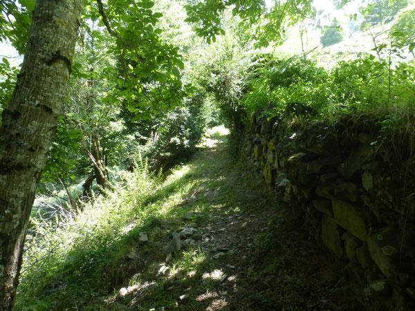 La sente intermédiaire du Bérat entre Cap de Lourbu et la Piste de Cambas est un peu étroite et par endroits encombrée de blocs. C'est la voie communale n°11 de Borce qui relie le Berat du Bas aux Forges d'Abel.