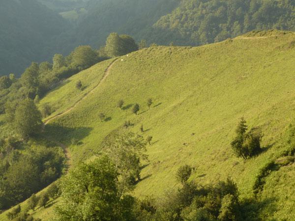Avant d'être maintenant seulement fauchées sur la largeur du chemin, les fougères étaient exploitées et récoltées jusque dans les années 80 sur toute la pente.