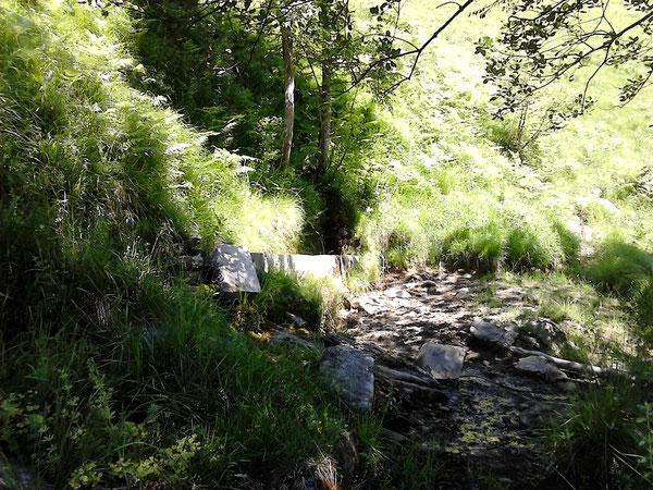 La Fontaine de Sept Hacs (mot béarnais signifiant les sept hêtres) mérite bien un petit détour d'un trentaine de mètres dans la première montée au-dessus du chemin de transhumance de Bergout.