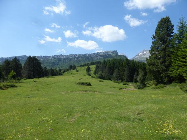 La mare de Girabé au premier plan, et au fond l'entaille du Pas d'Azuns entre les Tourelles à gauche et le Soum Couy à droite ; au centre, émergeant à peine du bois, la cime du Pic d'Anie.