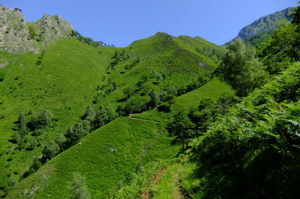 Les fougeraies de Lasies sont nichées dans un repli de terrain sous le Pic de Péneblangue.