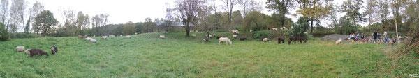 C'est tout pour aujourd'hui : couchage / camping au Bois de Madame, sur le coteau de Goès. Au menu du soir : herbe grasse pour les unes et saucisse-lentille au feu de bois pour les autres.