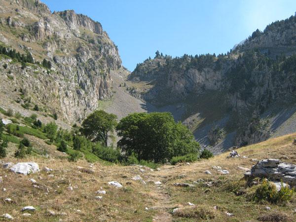 Au fond du désert minéral des Foyas del Ingeniero, le premier bosquet de hêtres fait figure de terre promise.