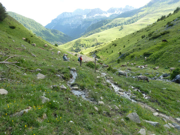 Descente avant de rejoindre Casa la Mina ;  au fond se prolonge la Haute Vallée du Río Aragón Subordán vers Hecho.