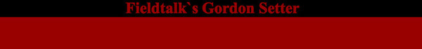 Fieldtalk´s Gordon Setter