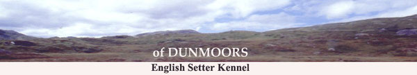 Dunmoors English Setter