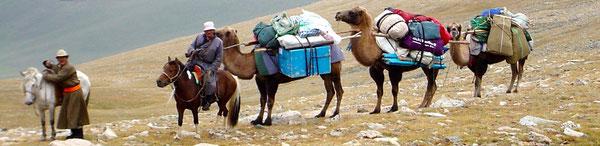 Les Chameaux de bât chez Les Kazakhs mongol