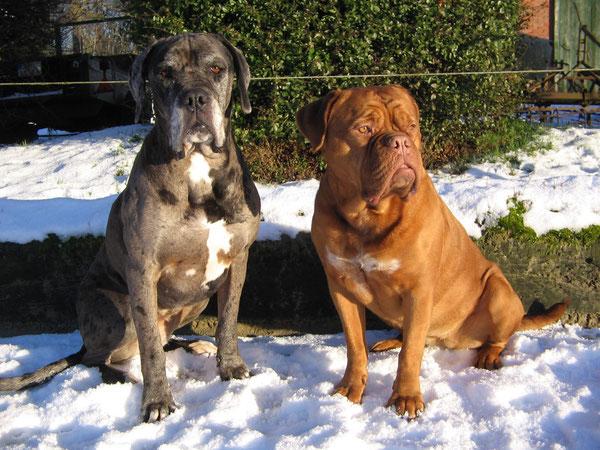 An einem schönen Wintertag ........!   Pepper & Yuma am 15.01.17