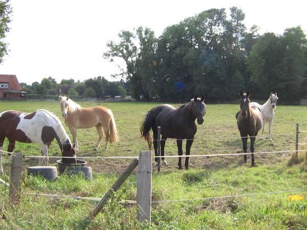 Unsere Herde im Sept.`18