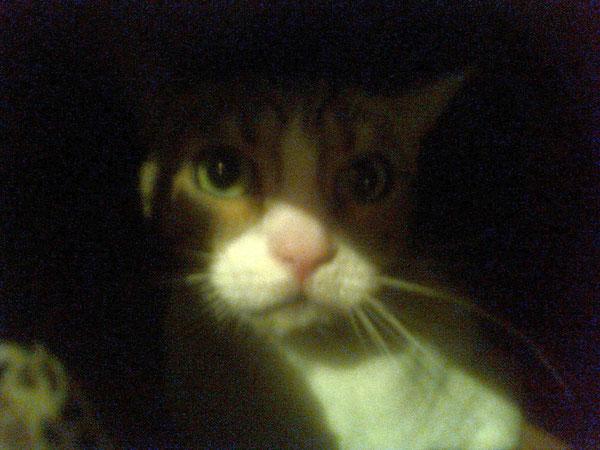 La prima immagine di Betta, la seconda minina, tanto timida ed ancora spaventata