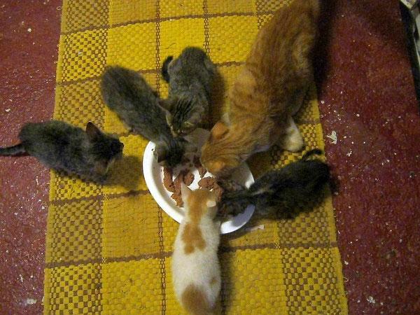 Penny assieme ai cinque piccoli