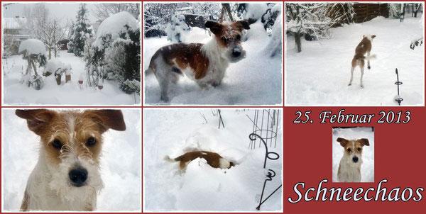 Kromfohrländer Jupp im Schnee