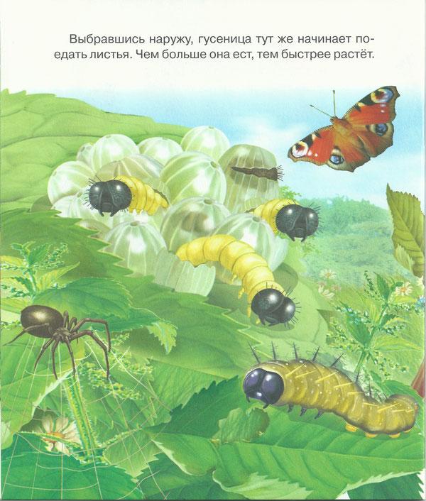 Появление бабочки в картинках для детей
