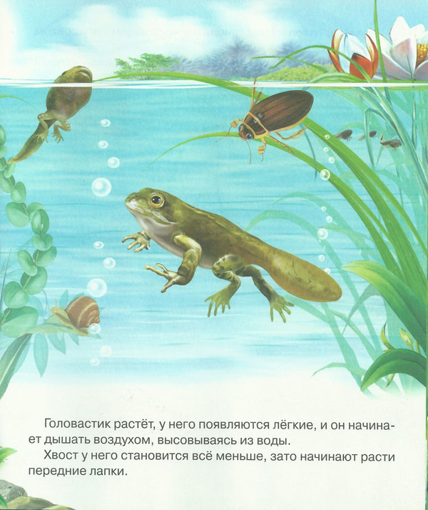 Картинка как появляется лягушка