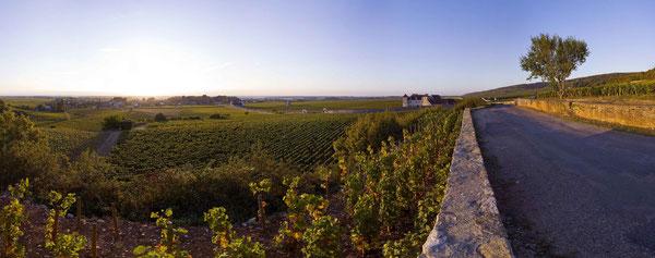 ブルゴーニュのワイン畑・景観