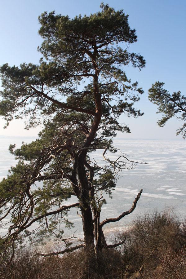 Am Weißen Berg an der Steilküste Richtung Achterwasser ff.