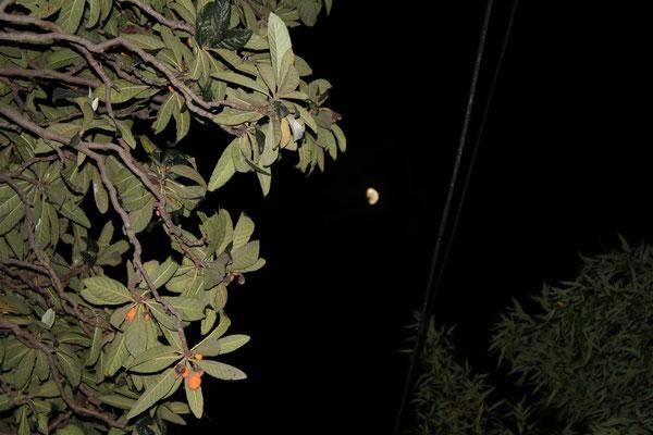 Mond über Mlini.