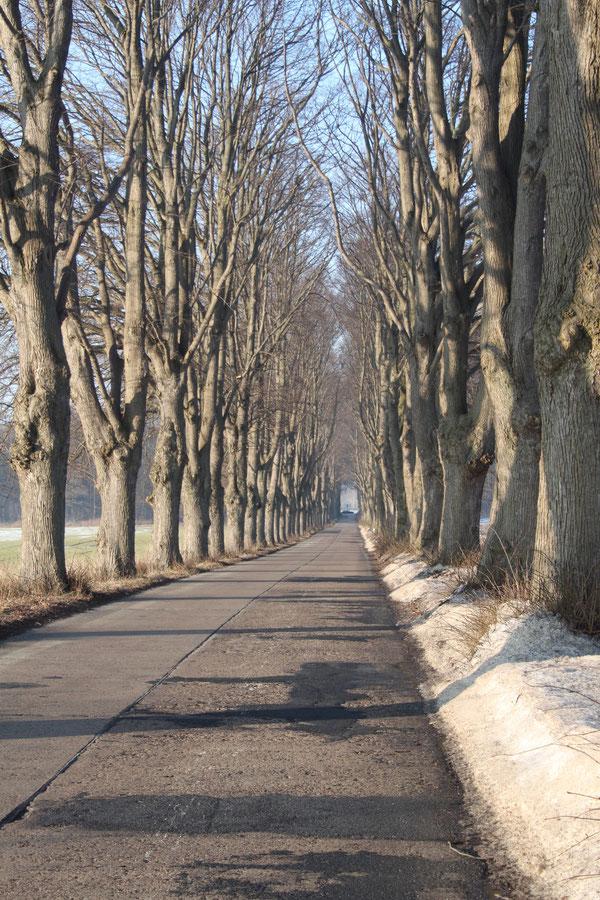 Die schönste Allee Usedoms bei Krummin-Lindenallee ff.