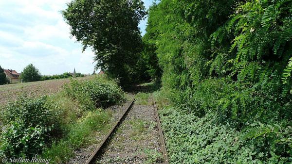 """Zustand einer betriebsfähigen """". . .-Strecke"""" im August 2010 wo die Sonderfahrt wenige Meter weiter einen Zwangshalt wegen """"Baum im Gleis"""" machen musste"""