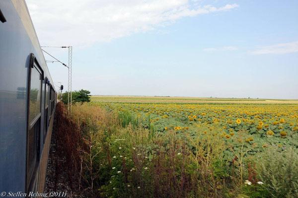 .... und weiter geht es in Richtung Sremska Mitrovica an unzähligen Feldern vorbei