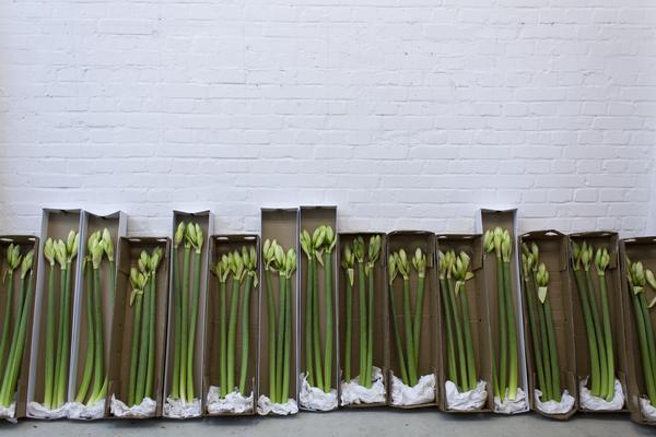 Thilo Droste, Blumen Arrangement /// 2015, Blumen an die Mitglieder einer Kunstjury per Post versandt